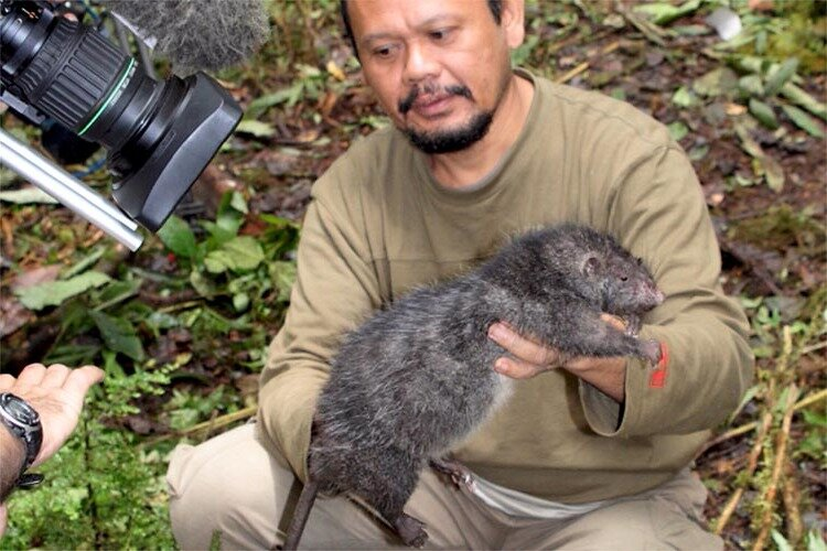 Какая самая большая крыса в мире, как называется и насколько опасна?
