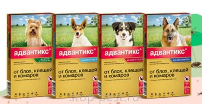 Обзор средств от иксодовых, подкожных и ушных клещей для собак, отзывы