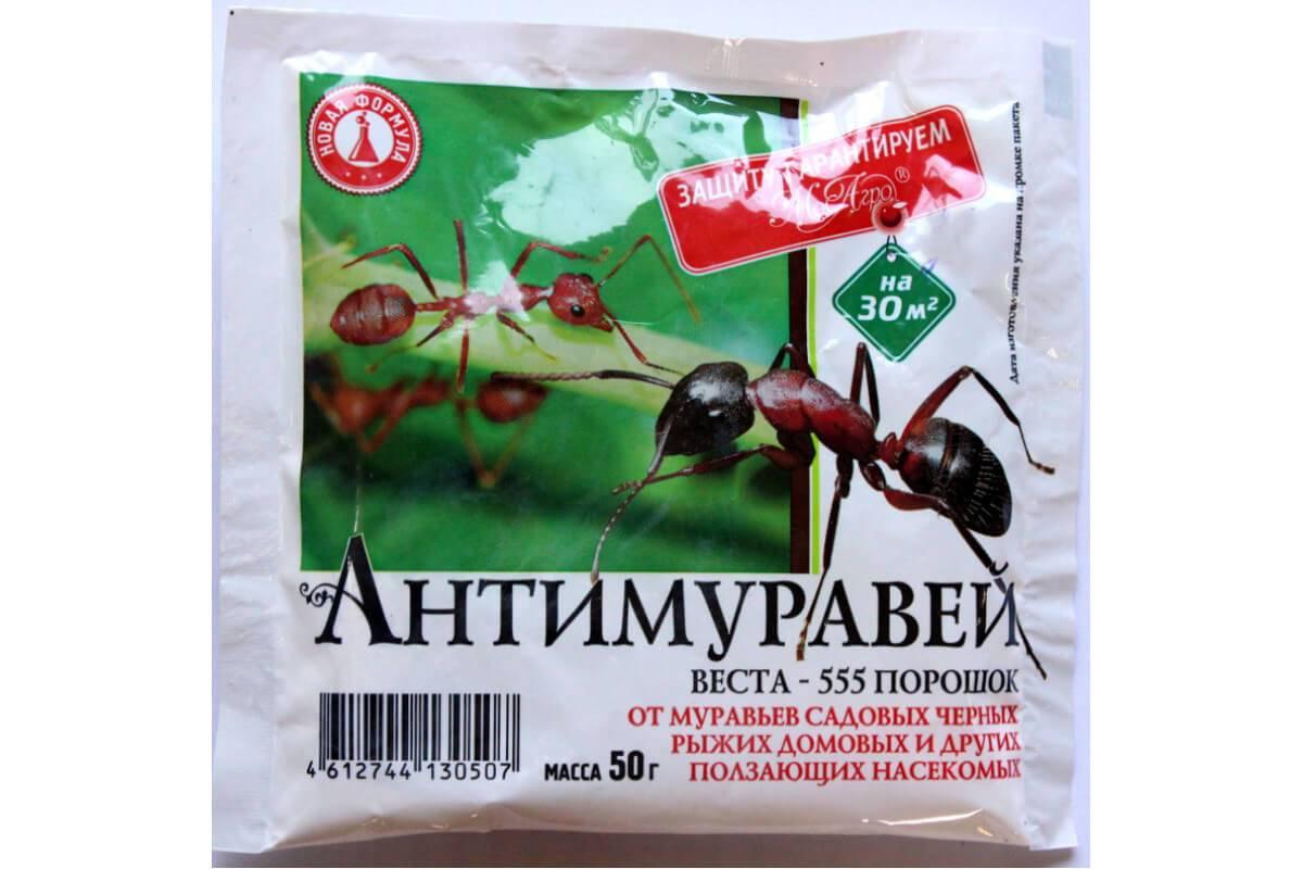 Как избавиться от муравьев на участке: 11 народных рецептов