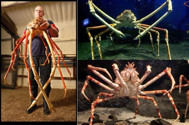 Самые большие пауки в мире, какие из них наиболее опасные и ядовитые?