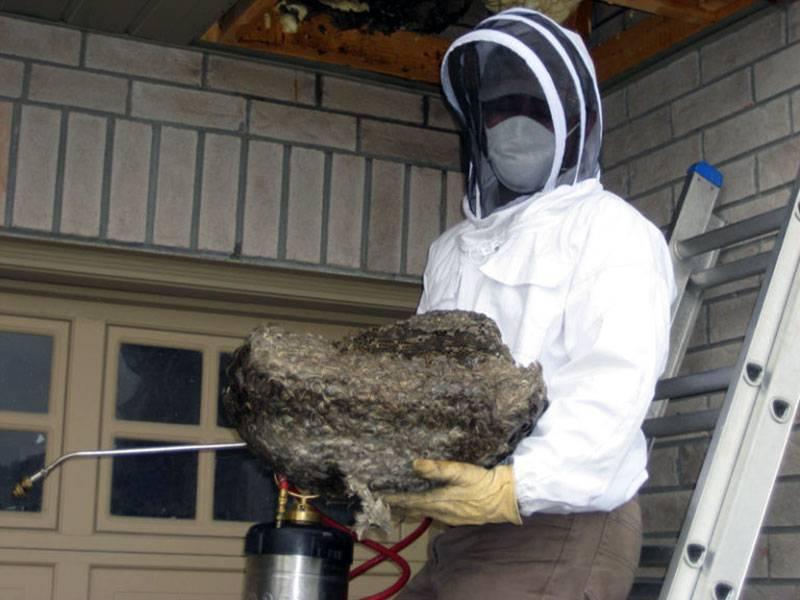 Как избавиться от пчел. избавиться от пчел. самые эффективные и мощные средства против пчелиного гнезда!