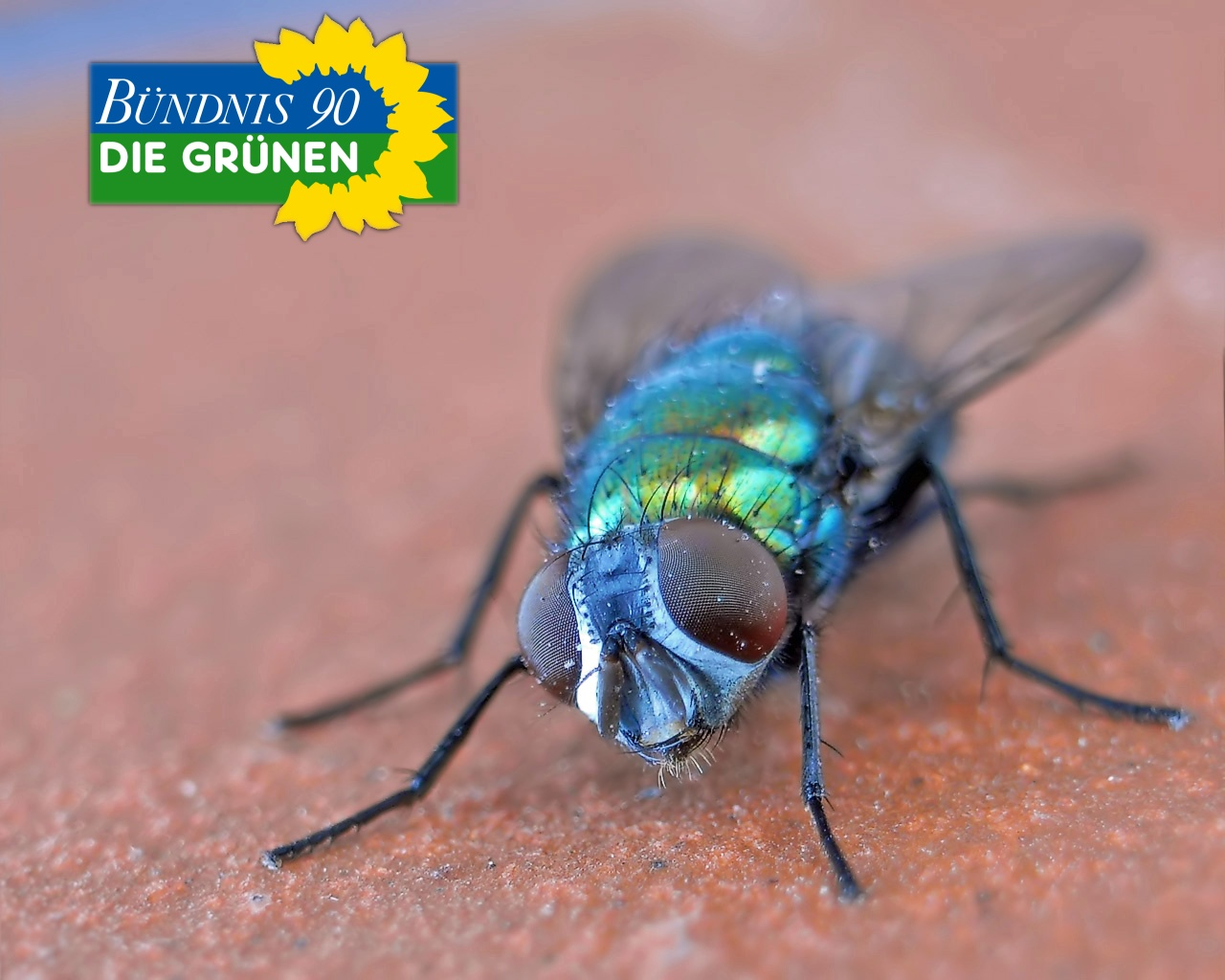 Виды мух с фото и названиями: описание, отличия