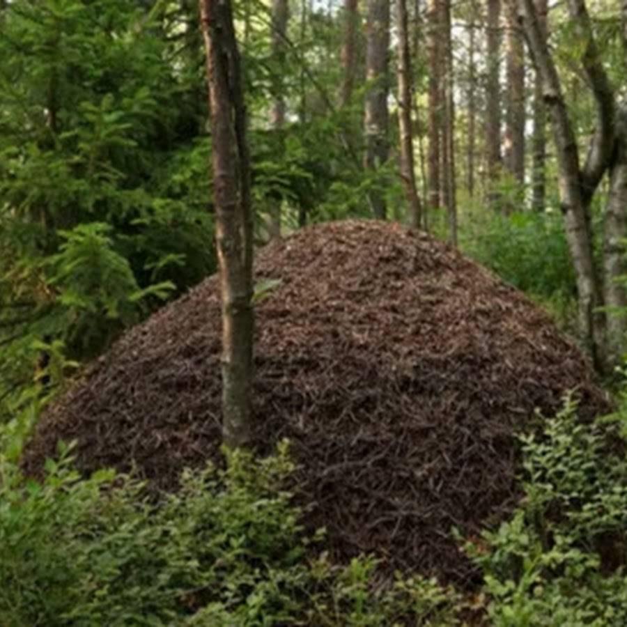К чему снятся муравьи женщине, муравьи в большом количестве во сне.