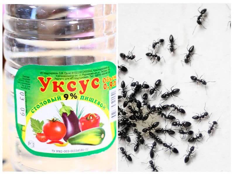 Как избавиться от муравьев в доме и на участке- лучшие средства