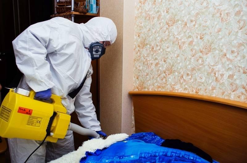 Как избавиться от пылевых клещей в квартире: чем они опасны