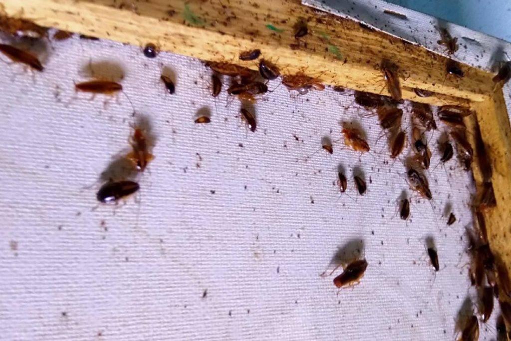 Эффективное средство от тараканов в квартире: обзор лучших методов борьбы