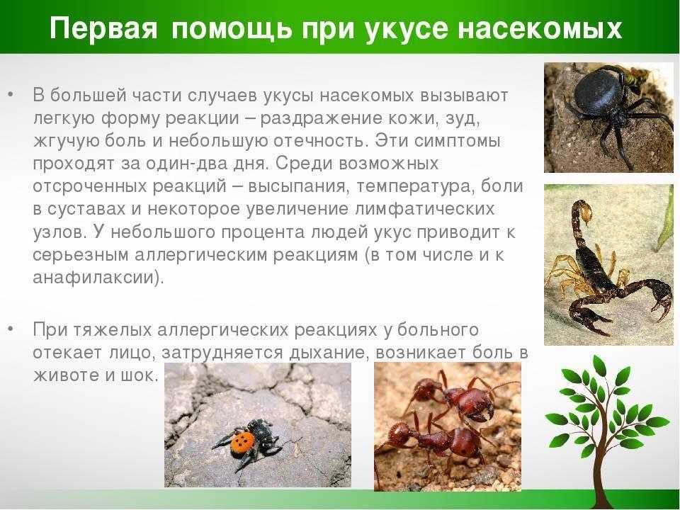 Укус тарантула – чем опасен для человека, и как помочь пострадавшему?
