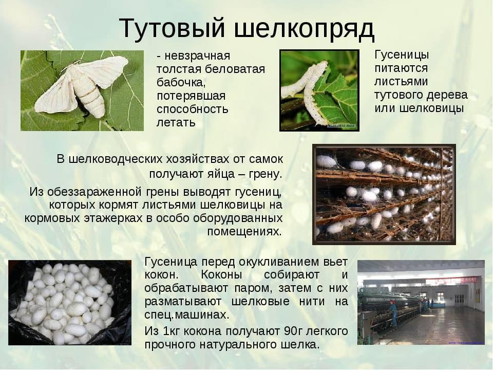 Описание и характеристики видов моли