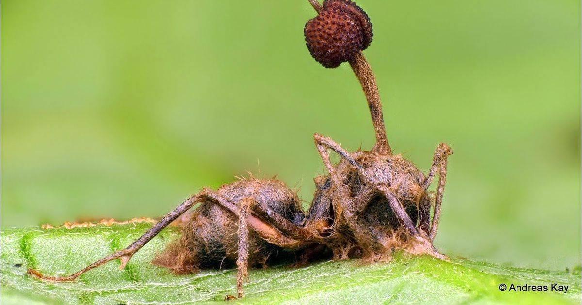 Грибы-паразиты: виды и чем они могу быть опасны | все о паразитах