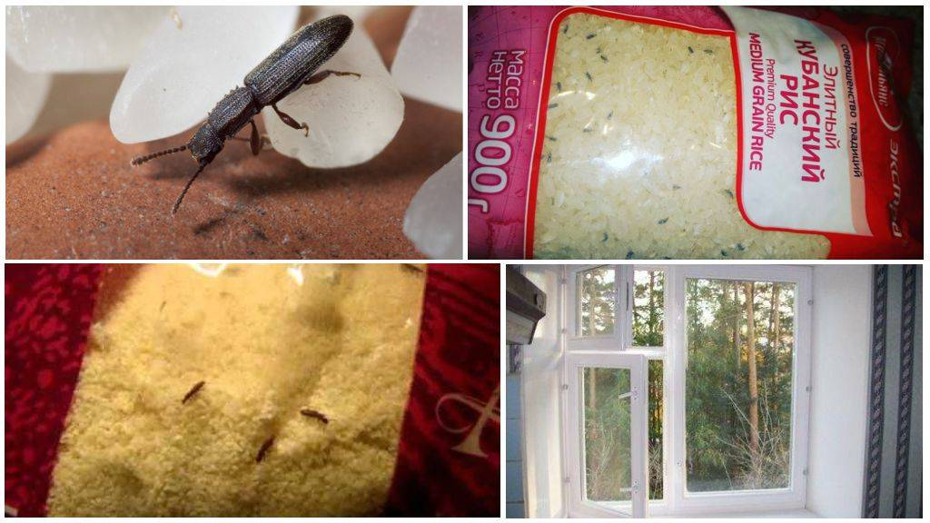 Как избавиться от мошек на кухне: инструкция плюс методы профилактики