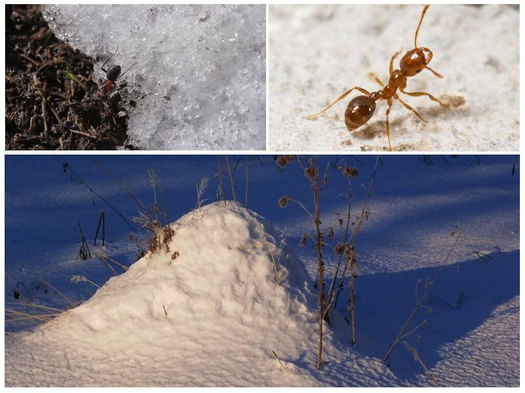 Где зимуют осы куда же они исчезают осенью. где зимуют осы и как они готовятся к зимовке? когда просыпаются осы весной
