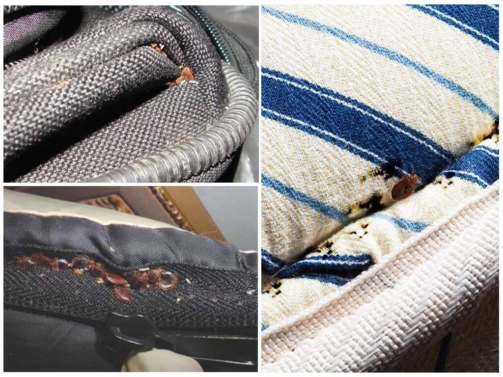 Вещевые клопы: как обработать одежду от клопов