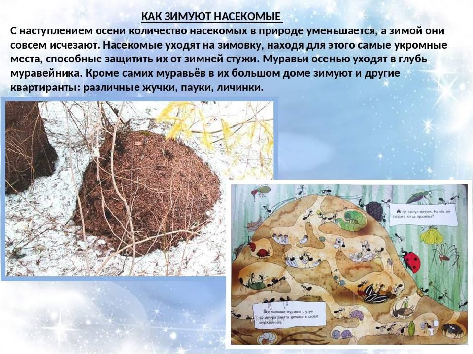ᐉ как зимуют муравьи: что они делают и где обитают зимой? - orensad198.ru