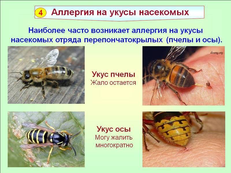 Пчела и оса: отличия