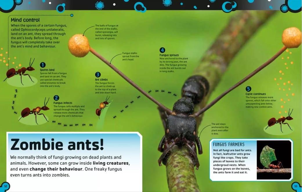 Как грибы-паразиты превращают муравьев в зомби?