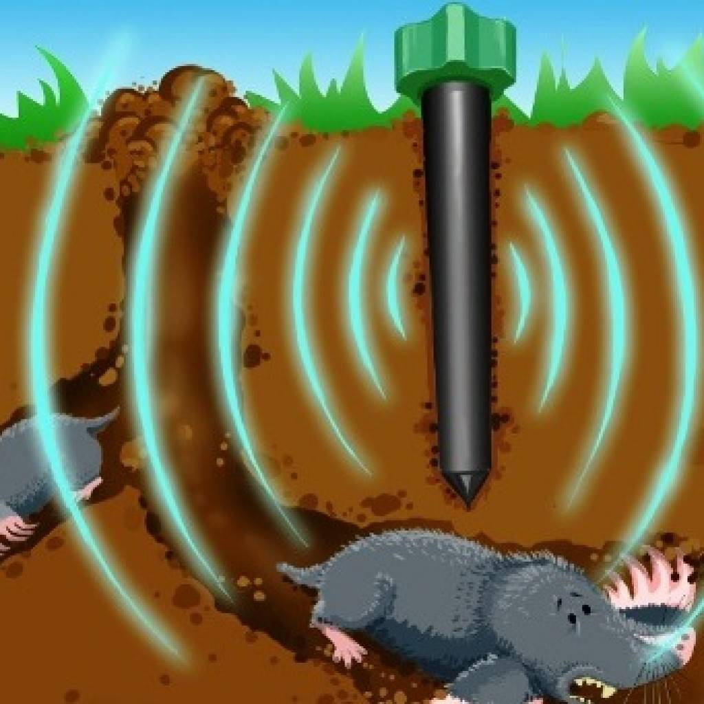 Как избавиться от землероек на участке: самые эффективные способы