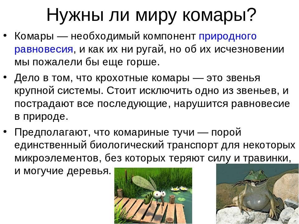 Можно ли есть комаров человеку. что будет, если комары исчезнут с лица земли
