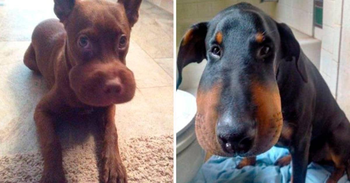 Укусила собака: что делать в домашних условиях? что делать, если укусила домашняя собака?