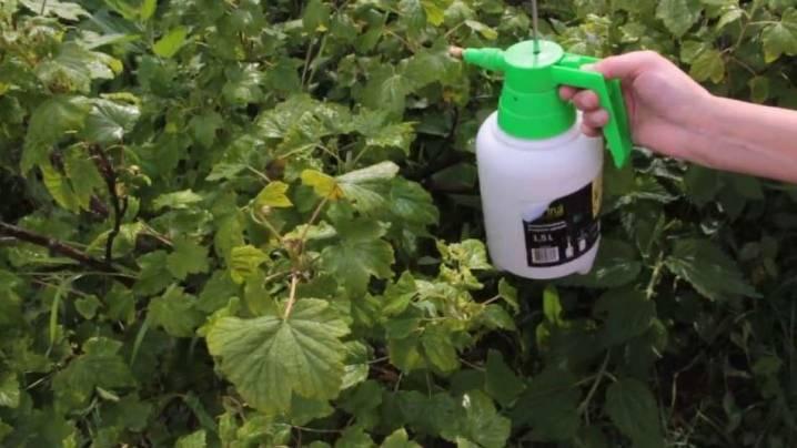 Как избавиться от тли в огороде навсегда