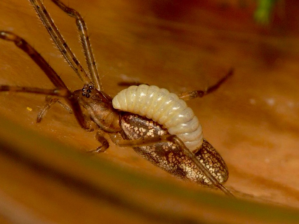 Животные паразиты: примеры, список | какие есть, названия
