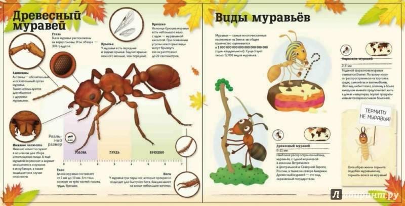 Как избавиться от крылатых муравьёв в доме