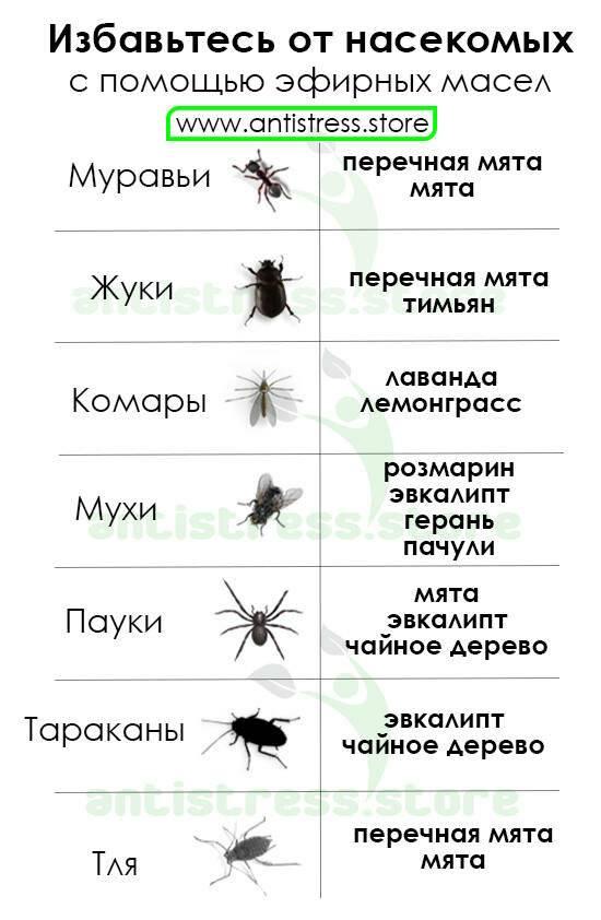 Как избавиться от пчел на даче: отпугнуть от своего участка, как выводить пчел с огорода, дома, сарая