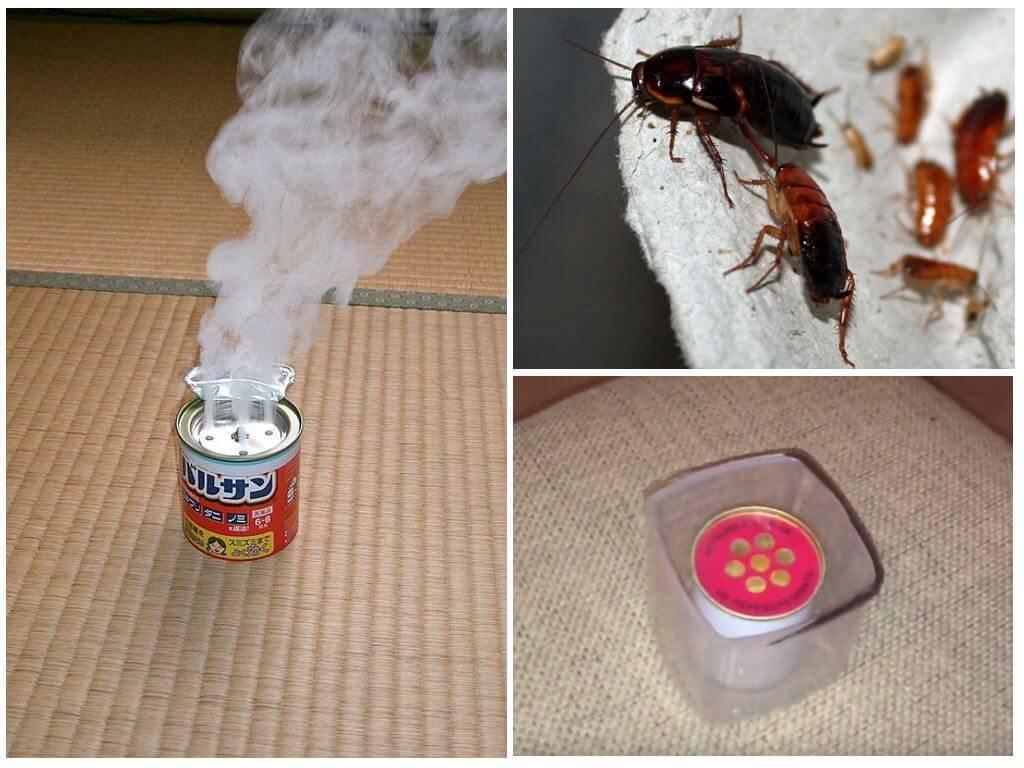 Как травить тараканов в квартире самостоятельно