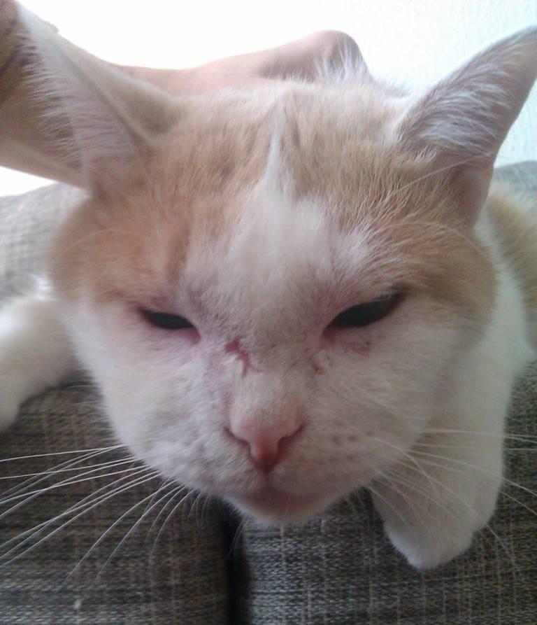 Что делать если кошку укусила оса или пчела, первая помощь