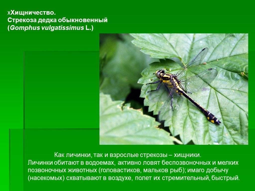 Ржанка птица. описание, особенности, виды, образ жизни и среда обитания ржанки | живность.ру
