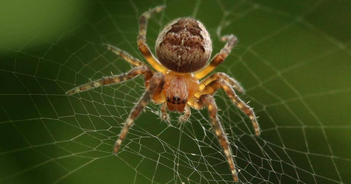 Приметы про пауков: в доме, квартире, на окне