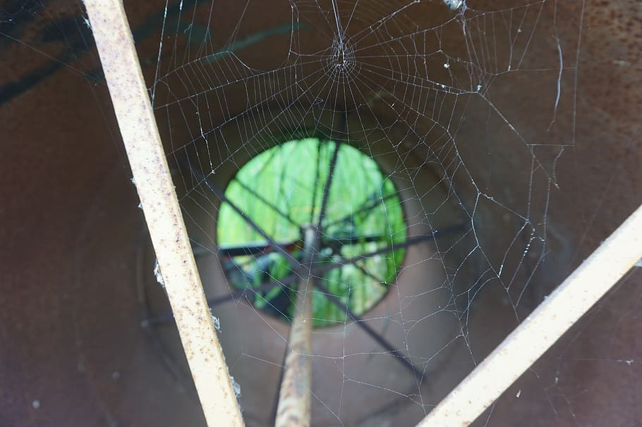 Как избавиться от ос на балконе