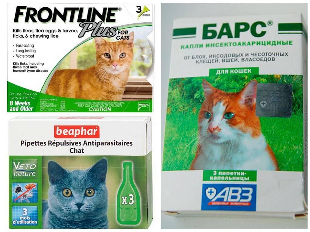 ❶ топ-10 лучших средств от клещей для кошек и котят - отзывы заводчиков и советы ветеринаров