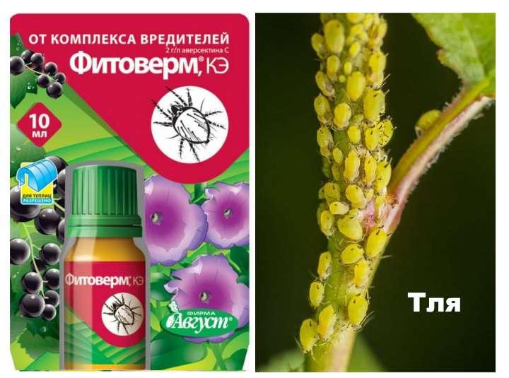 Фитоверм: инструкция по применению для комнатных растений и в огороде