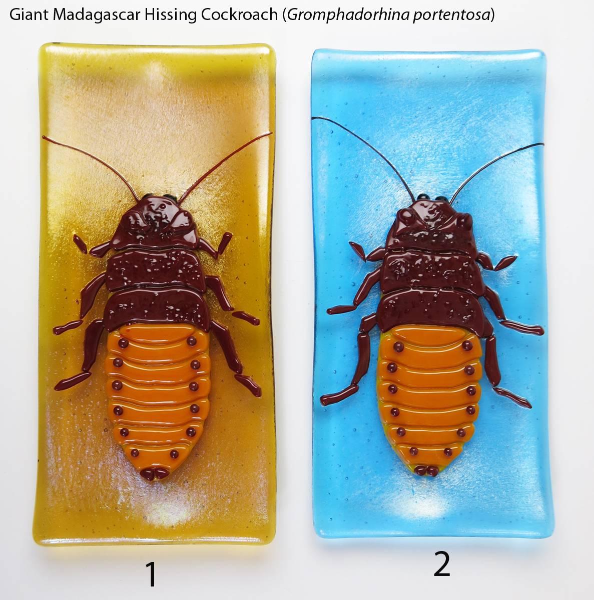 Мадагаскарский шипящий таракан | мир животных и растений