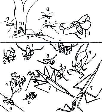 Водяные клопы: гладыш, гребляк, плавт, водяной скорпион и другие, как выглядят, чем питаются в природе, как передвигаются, опасен ли их укус для человека