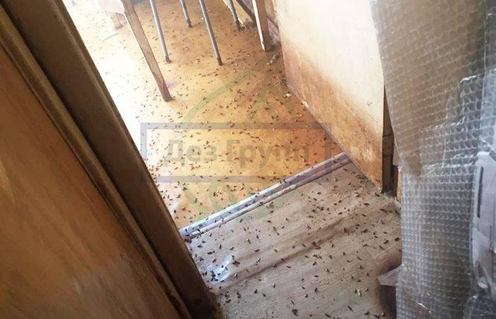 Если у соседей клопы: что делать, как защитить квартиру, куда жаловаться