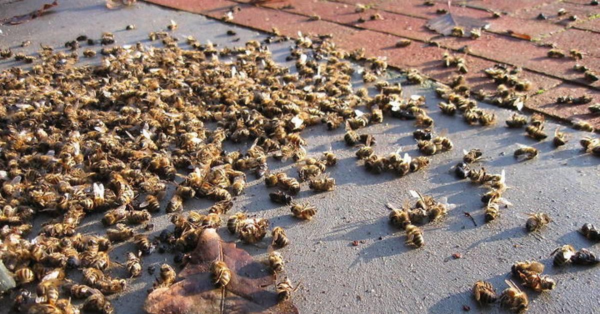 Причины гибели пчел
