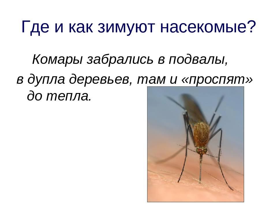 Жизненный цикл комнатной мухи. насекомые зимой спят ли насекомые ночью