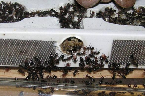 Ловушки для муравьев своими руками: в саду и в огороде - etocvetochki.com