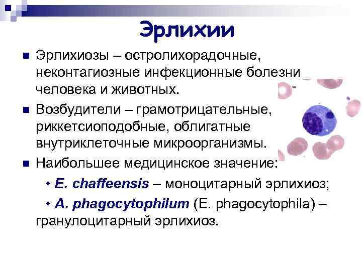 """Эрлихиоз это опасная инфекция, которая передается через укус клеща, вызываемая особой бактерией. причины, симптомы и лечение в медицинской лаборатории """"оптимум""""."""