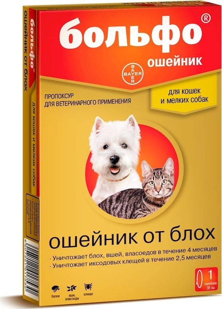Как выбрать и использовать ошейник от блох и клещей для собак?