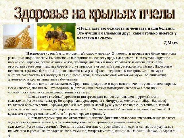 Полезные свойства и вред пчелиных укусов