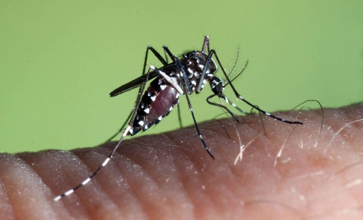 Комары в исландии