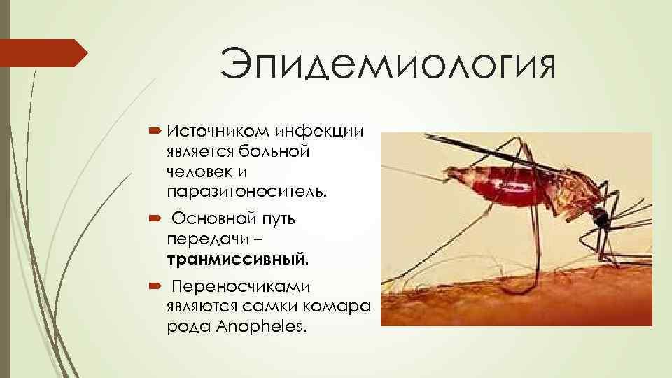 Всё о малярийном комаре: чем опасен и как его отличить?
