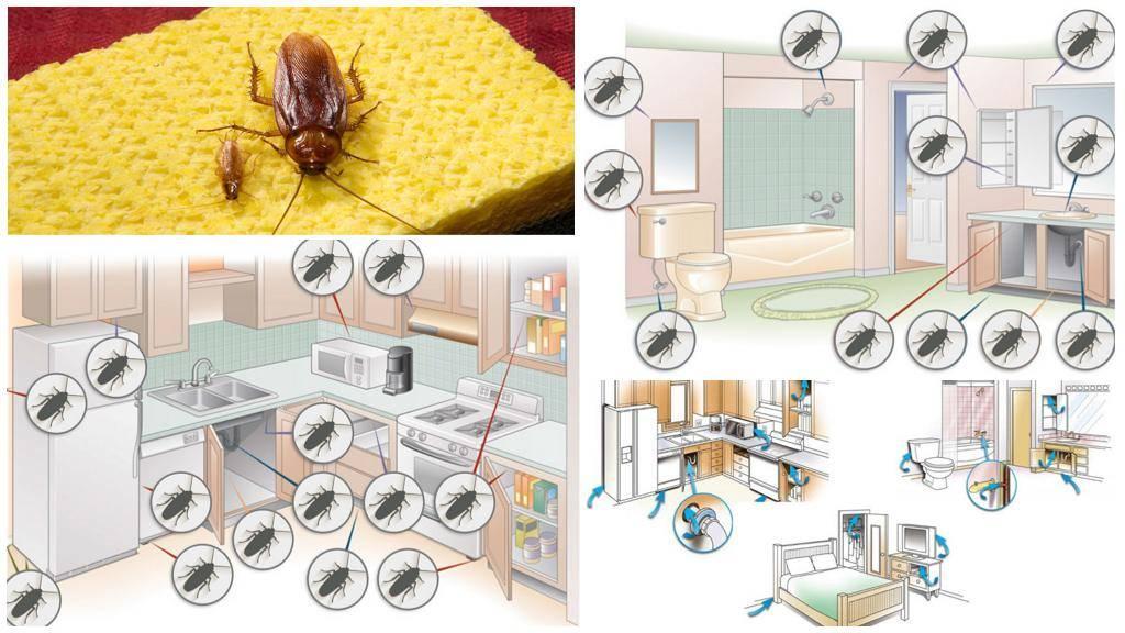 От чего заводятся тараканы в квартире и доме, как проникают