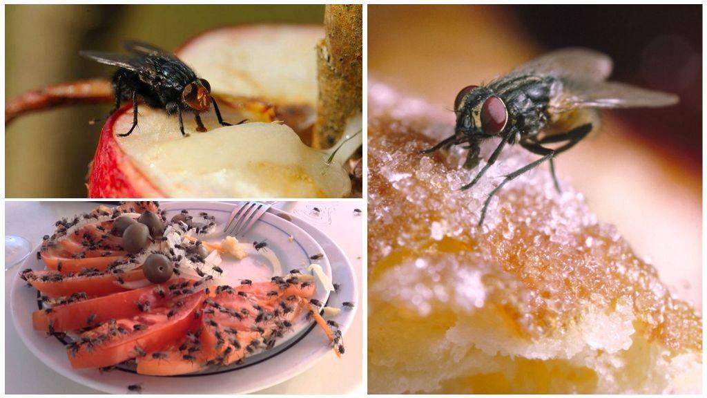 Чем кормить венерину мухоловку? чем она питается? selo.guru — интернет портал о сельском хозяйстве