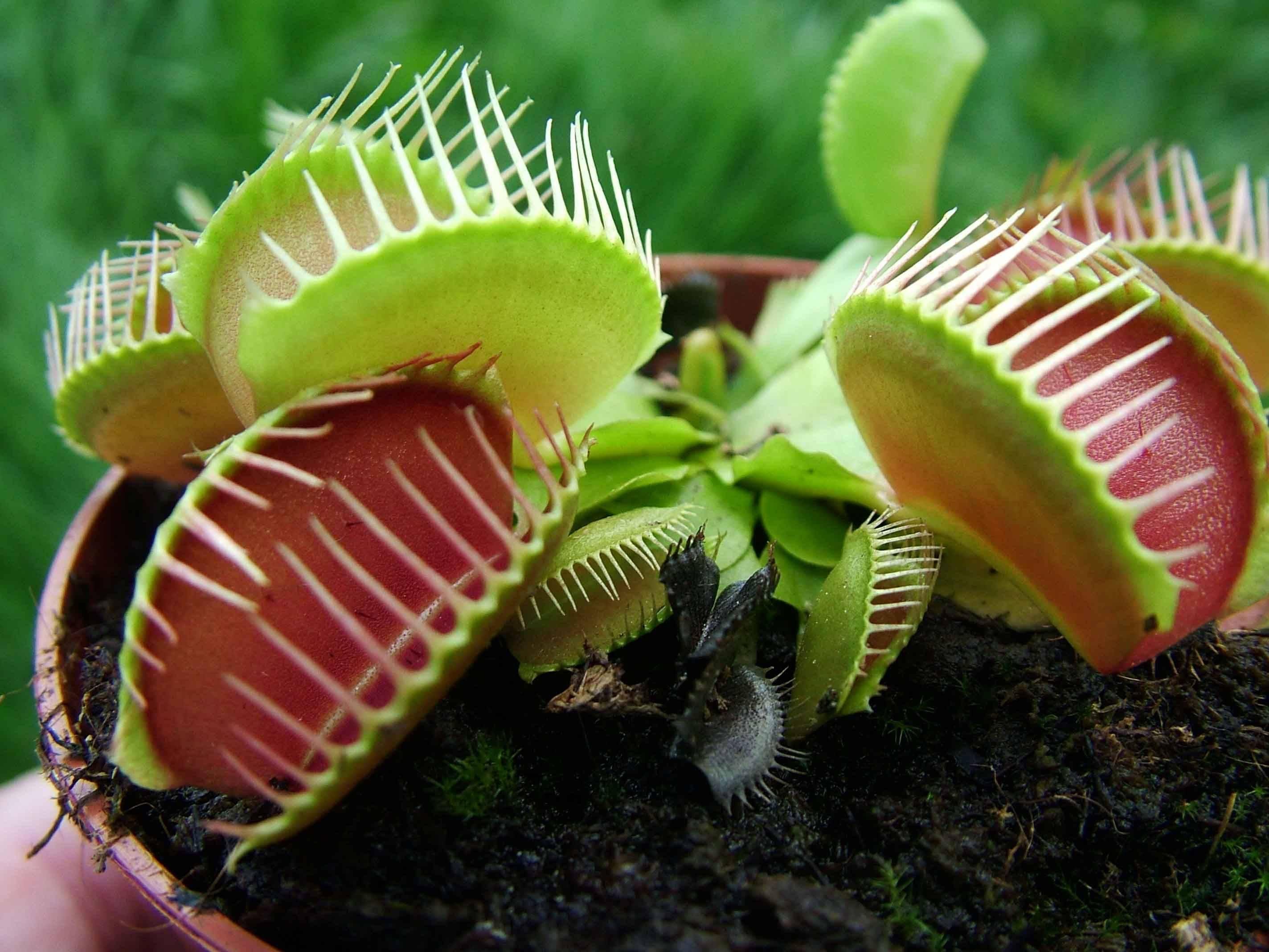 10 самых удивительных хищных растений в мире