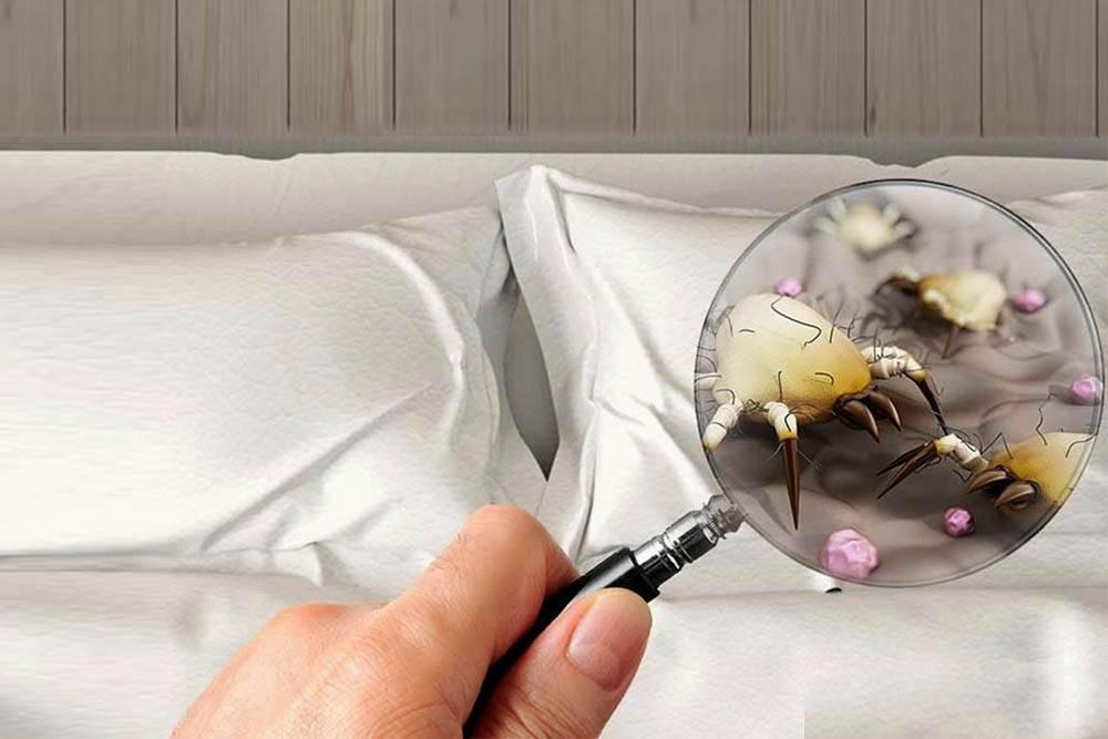 Откуда берутся клещи в подушках?