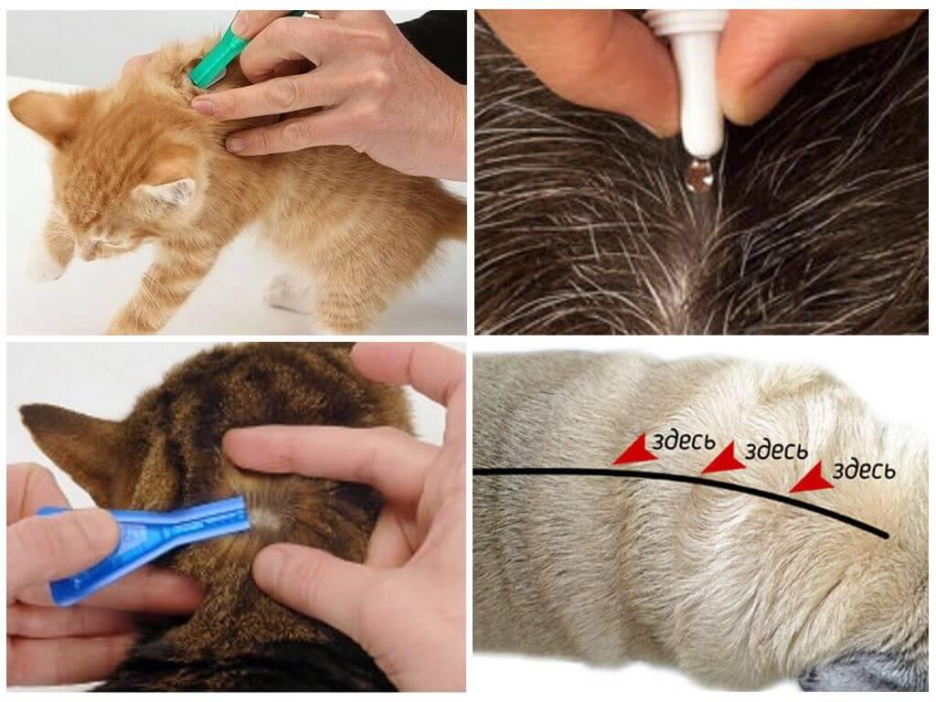Что будет, если кошка или кот слижет капли от блох - сорнякам нет