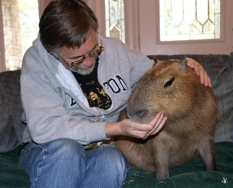 Самая большая крыса в мире - фото и описание